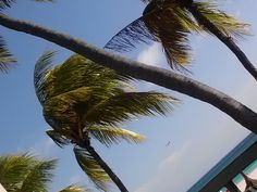 planes and palm trees