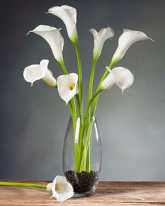White Calla Lillies. Use as a centerpiece for my dining room table.