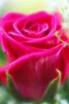 Hot Pink      Diane's Fine Art Photography by Diane Johnson @ 'Beauty of the soft and delicate rose...'