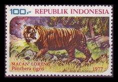 Indonesia - Javan Tiger 1977 - Panthera tigris sondaica is a species endemic to the island of Java or in other words the animals are only found on the island of Java.  The Javan tiger (Panthera tigris sondaica) is an extinct tiger subspecies that inhabited the Indonesian island of Java until the mid-1970s. It was one of the three subspecies limited to islands.