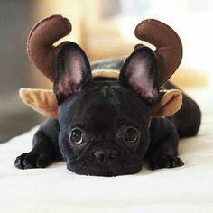 Ohhhhh trop mignon !!!!  Je veux le même !!!!