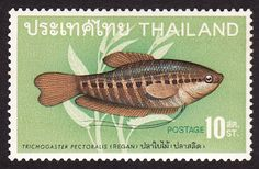 Stamp from Thailand of Fried Snakeskin Gourami