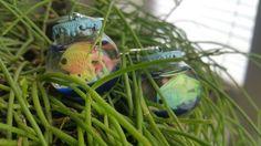 Fish bowl earrings Charlotte, Fish, Earrings, Animals, Ear Rings, Stud Earrings, Animales, Animaux, Pisces