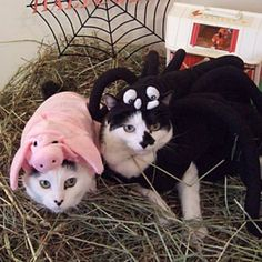 Wilbur and Charlotte - Charlotte's Web