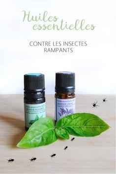 Découvrez mes huiles essentielles préférées, et astuces pour faire fuir les insectes : moustique, guêpe, mouche, araignées... !
