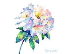 RHODODENDRON LODERI Water Colour Flower Art Print by SmiffyStyle