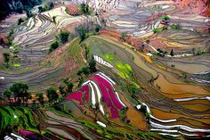 Would love to have this kind of thing framed and hung. Rice Field