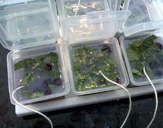 "Freeze mint and fruit in cubes and hang in coop for chicks when it's hot out.one of several ideas in the attached link focused on helping your chickens (& ducks) ""beat the heat. Chicken Toys, Chicken Treats, Chicken Life, Chicken Feed, Small Chicken, Raising Backyard Chickens, Keeping Chickens, Pet Chickens, Backyard Farming"
