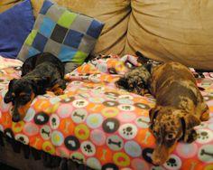 I <3 weiner dogs