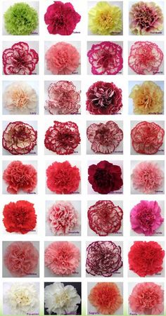 This is Why Carnations Are the Best Wedding Flower Ever
