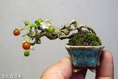 Beautiful miniature bonsai