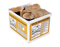Portabella Mushroom Kit --  Grow Your Own Gourmet Portabella Mushrooms, Grow your own delicious and nutritious mushrooms, Foolproof kit includes everything you need; just add water, Yields up to four pounds of gourmet mushrooms