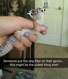 Someone put the dog filter on their gecko. this might be the cutest thing ever! Cute Animal Memes, Animal Jokes, Cute Funny Animals, Funny Animal Pictures, Funny Dogs, Funny Cute, Cute Dogs, Cute Pictures, Funny Humor