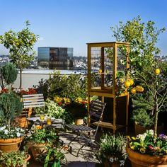 The vast terrace of this penthouse apartment in New York City has been planted with mature fruit trees and an herb garden, and it houses an open air dining room. It's easy to see why it's a favorite pilgrimage for hummingbirds.