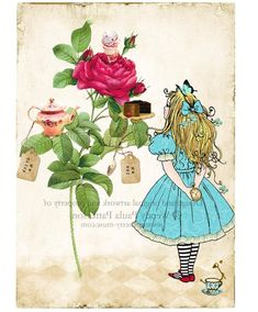 alice in wonder land, the rose