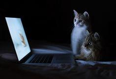 Meet the Cutest Kitten in the World's Partner in Crime - My Modern Metropolis
