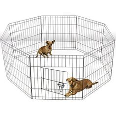 OxGord Metal Wire 8Panel Folding Exercise Yard Fence for Pets 36 Inch Black >>> Continue to the product at the image link. This is an Amazon Affiliate links.