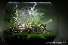 My BiOrbAir terrarium as pictured on the March Inside this terrarium, Lepanthopsis astrophora 'Stalky' and Restrepia purpurea 'Rayas Vino Tinto' are flowering. Terrariums, Automatic Watering System, Miniature Orchids, Bottle Garden, Planting Flowers, Flowering Plants, Self Watering, Outdoor Plants, More Pictures