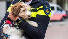 Honden moeten zedenslachtoffers troost bieden