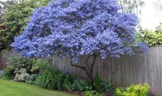 Image result for best trees to line driveway