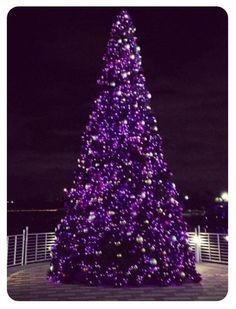 For a vibrant Christmas tree and festive decorating scheme for a contemporary home, how about opting for a rich plum? These striking purple Christmas trees and coordinating decorations are a great … Purple Love, All Things Purple, Shades Of Purple, Deep Purple, Pink Purple, Purple Stuff, Purple Punch, Purple Christmas Tree, Noel Christmas