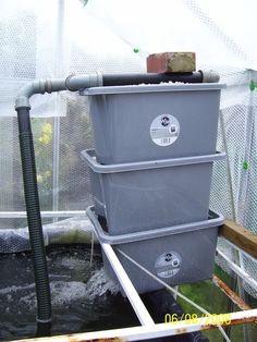 Diy gravity feed sieve filter koi pond construction for Koi pond filter diy