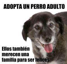 Los animales adultos tambien merecen un hogar