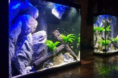 New client project in Melbourne completed by Aquaprofessional for a custom built aquarium. Aquaprofessional ⭐⭐⭐⭐⭐ maintenance service will be conducted ensuring the aquarium is a healthy and vibrant ecosystem Custom Aquariums, Melbourne, Vibrant, Gallery, Healthy, Projects, Log Projects, Health