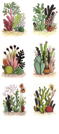 Illustration cacti Magic Cactus Garden - geffen refaeli illustration