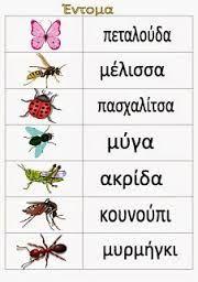 Αποτέλεσμα εικόνας για εντομα νηπιαγωγειο Spring Projects, Spring Crafts, Learn Greek, Greek Language, Spring Activities, Kids Corner, I School, Elementary Art, School Projects