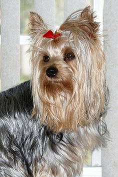 Our Pal Zoey - In her memory, Don't buy dog food or treats made in China, check the labels, they have caused many deaths.