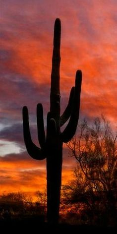 Desert Sky -Sunset | Saguaros along the Peralta Trail down on the south end of the Superstitions | Arizona | Sunset by Mike Jones