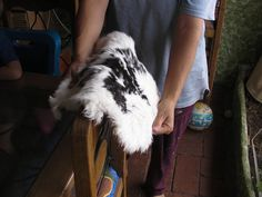 Great tutorial for tanning rabbit hides. Great blog actually
