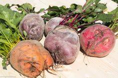Grădina de la țară - de la pasiune la o mică afacere de familie - gardenbio.ro Eggplant, Vegetables, Sun, Plant, Lawn And Garden, Eggplants, Vegetable Recipes, Veggies