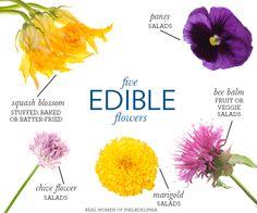 Five edible flowers worth tasting infographic | Kitchen garden | jardin potager | bauerngarten | köksträdgård