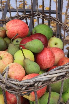Gathering of the apples and pears