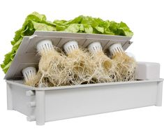 Hydrofarm GCSB Salad Box Hydroponic Salad Garden Kit *** Desire to recognize much more, click the picture. (This is an affiliate link). Indoor Hydroponic Gardening, Hydroponic Lettuce, Aquaponics Greenhouse, Aquaponics Fish, Hydroponics System, Indoor Garden, Hydroponic Growing, Container Gardening, Salad Box