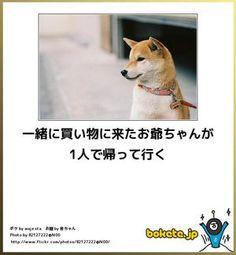 【ボケて】最新ボケランキング&殿堂傑作ネタアーカイブ【bokete】 - NAVER まとめ