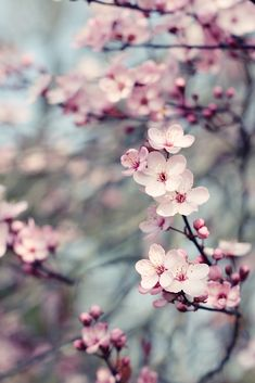 Tree Flowers | Canon 50d + Canon 50mm F1.8 55laney69.blogspo… | Flickr
