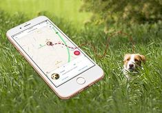 Never lose your pet again! PawTrails app tracks your pet easily and quickly through our GPS harness or collar. It will give you real peace of mind. Activity Monitor, Cellular Network, Peace Of Mind, Your Pet, Finding Yourself, Track, Lost, App, Activities