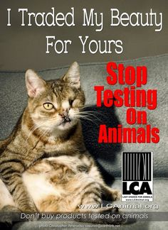 Stop testing on animals!! Spread this! Repin it!
