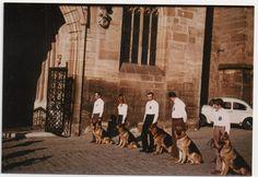 Foto  Schäferhund Schäferhunde