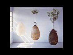 Diese Urne verwandelt deinen Körper in einen Baum wenn du stirbst - Wach Auf