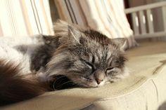 My beautiful cat, Musse