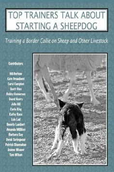 Top Trainers Talk about Starting a Sheepdog: Training a Border Collie on Sheep and Other Livestock: Sally Molloy, Heather L. Nadelman: 9780979469015: Amazon.com: Books