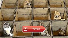 😸 Funny Cats Play in the Box Kucing Lucu 😼 Funny Cats Play in the Box Kucing Lucu 😽 from Pet Lovers 😻