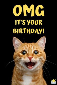 Funny Happy Birthday Images - Happy Birthday Funny - Funny Birthday meme - - Funny happy birthday image with surprised cat. The post Funny Happy Birthday Images appeared first on Gag Dad.