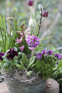 flowering spring bulbs