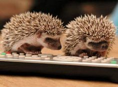 Our library hedgehog, Casper, likes to walk on the keyboard, also.  Maybe he's trying to write a book!
