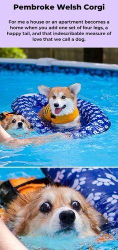 Pembrokewelshcorgi Corgi Cute Dogs Dogs